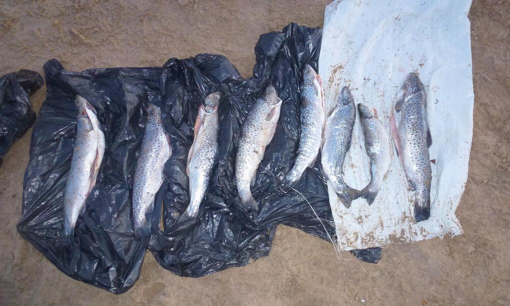 В Поморье пограничники конфисковали у браконьеров полтонны рыбы